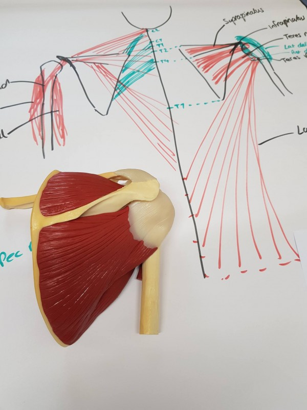 Shoulder Pain Archives - Sports Physio UK